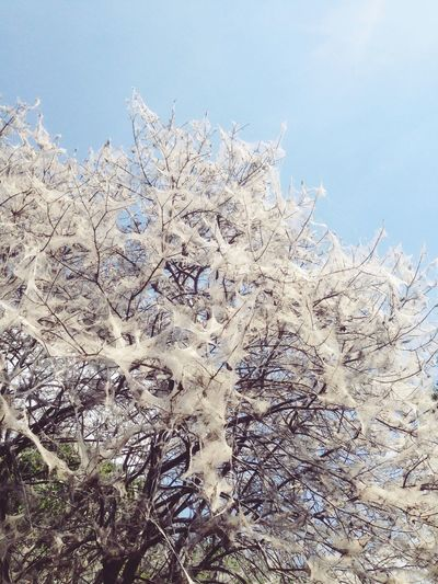 Nature Plant Sky Tree Ermine Moth Web Communal Web Fairytale  Dream Dreamy Strange