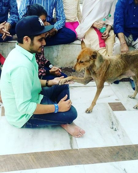 Hello doggy Miracle Dog Ambaji Gabbar Fun Handshake Together Alltogether