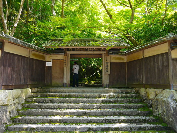 Adult Adults Only Architecture Beauty In Nature Built Structure Day Forest Growth Japan Kyoto Kyoto,japan Limited Nature One Man Only One Person Outdoors People Rurikoin Tree