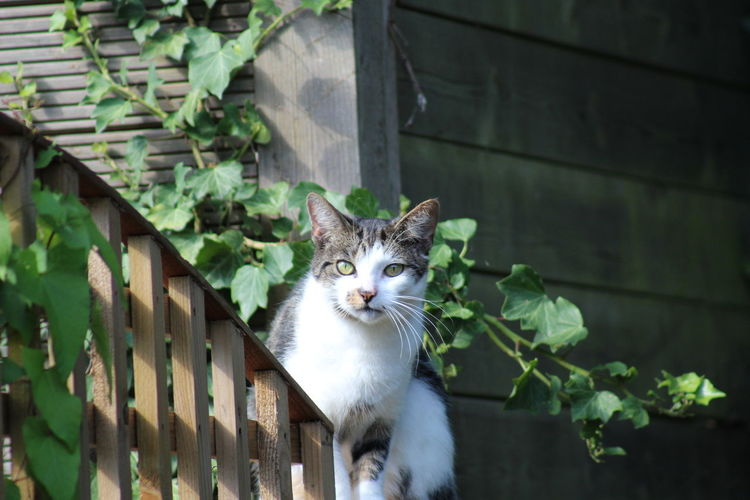 Portrait of cat on a fence