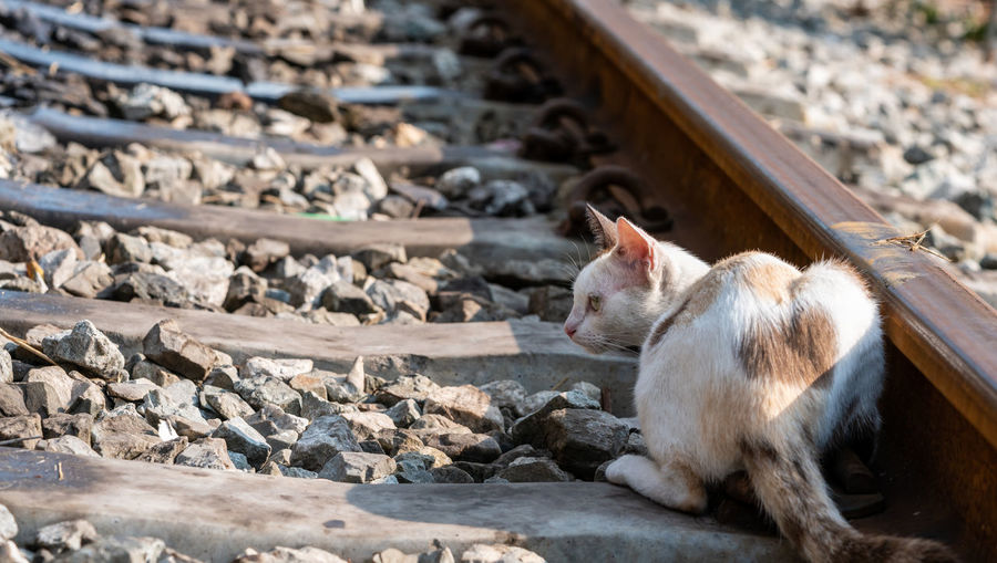 Animal Themes Mammal Animal One Animal Vertebrate Domestic Pets Day Solid Domestic Animals No People Focus On Foreground Nature Rock Track Outdoors Domestic Cat Stone - Object Railroad Track Sunlight