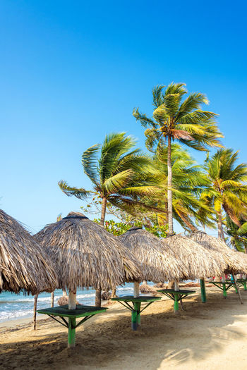 Row of tables and palm trees on a beach in Covenas, Colombia America Beach Beautiful Blue Caribbean Coast Colombia Coveñas Day Landscape National Park Nature Nature Outdoors Palm Scenic Sea South Sucre Tolu Tourism Travel Tree Tropical Water