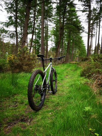 Tree Bicycle Bicycle Rack Grass Sky Green Color Stationary Green Woods Vehicle Countryside