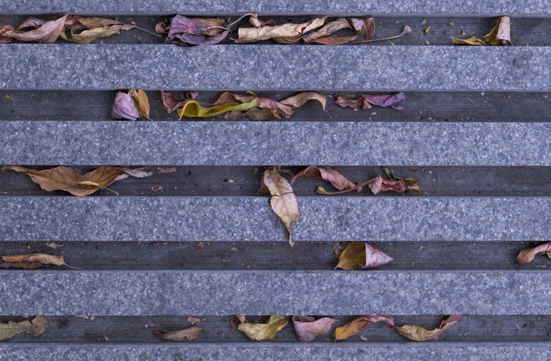 High angle view of leaves fallen on staircase