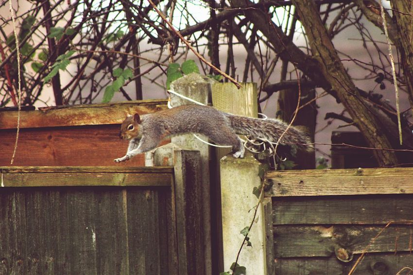 Movement Animal Themes Squirrel Jumping
