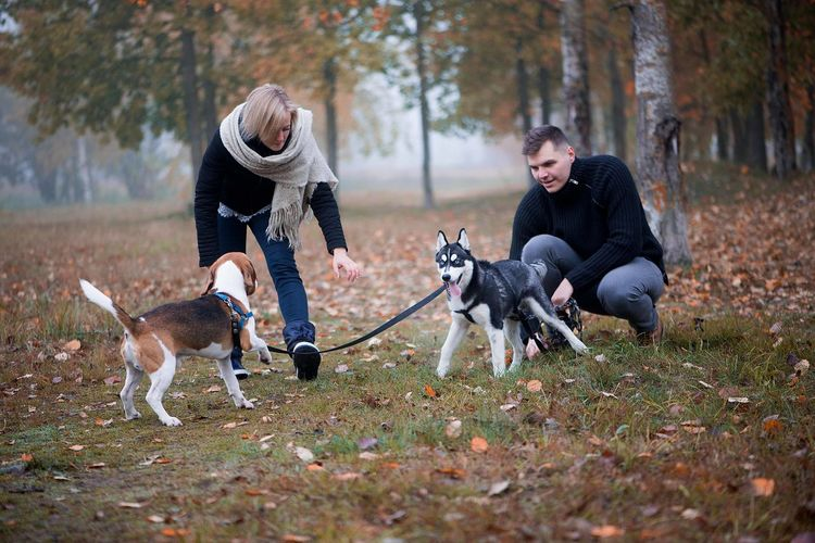 A young family with two dogs walks in the autumn park in the fallen city park