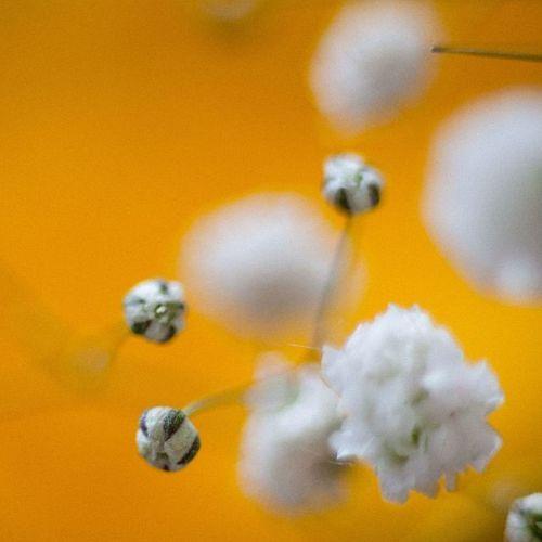 Тест обьектив хобби яжфотограф цветочки цветавесны желтый фотонастроение Test Lens Photo Photomood Flowers Yellow Colorsnature Spring Ilike it