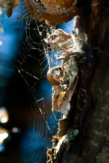 In the woods in autumn at dawn Backgrounds Birch Cortex Corté  Dawn Forest Morning Nature Net Reflection Spider's Web Spiderweb Tranquility Trees Web Wood Wood Chips Wood Flakes Wood-flak Woodchips