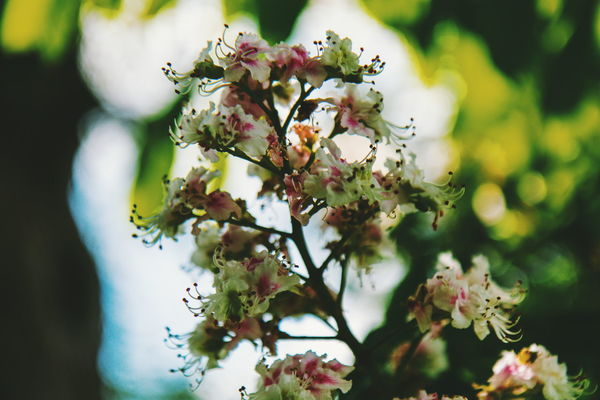 Farnham Castle and Park Vibes Nature Summer Beautiful Flower Head Tree Flower Branch Springtime Leaf Blossom Plant Part Multi Colored Close-up In Bloom