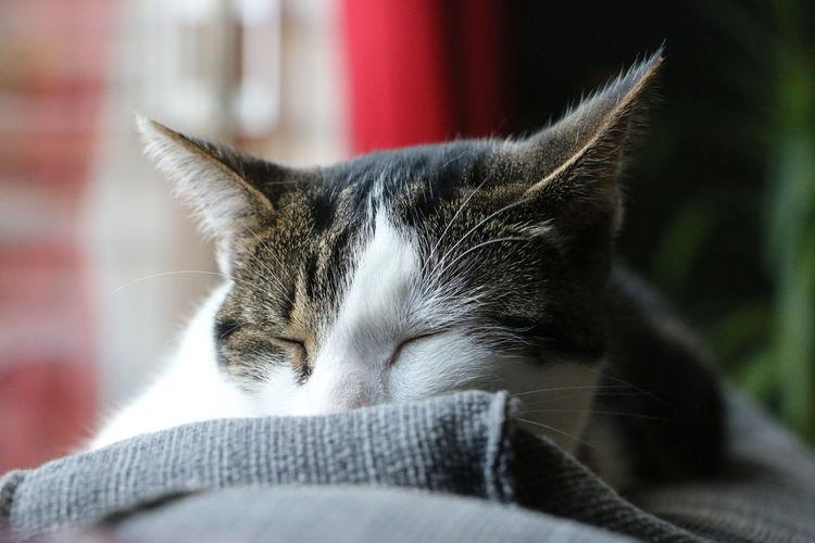 Cat enjoying a