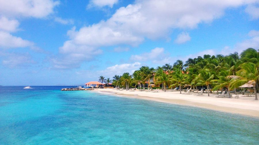 Life Is A Beach Beautiful Surroundings Holiday Relaxing Naturelovers Beach Water Water Reflections Bonaire Taking Photos Caribbean EyeEm Nature Lover Nature Enjoying The View Enjoying Life Enjoying The Sun Traveling Vacation Ocean View Ocean Sky Blue Sky Landscapes With WhiteWall Blue Wave Palm Trees