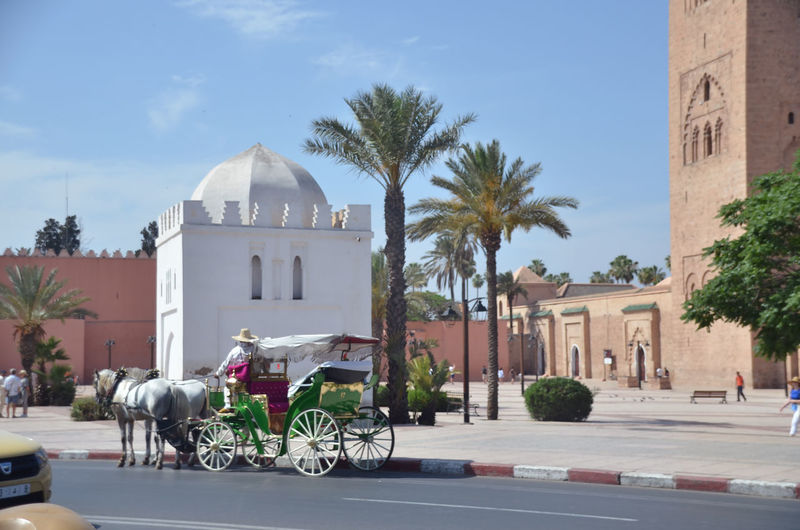 Horses Architecture Belief Building Building Exterior Built Structure Calesse City Day Land Vehicle Marrakech Mode Of Transportation Nature No People Outdoors Palm Tree Place Of Worship Plant Religion Sky Spirituality Street Transportation Tree Tropical Climate