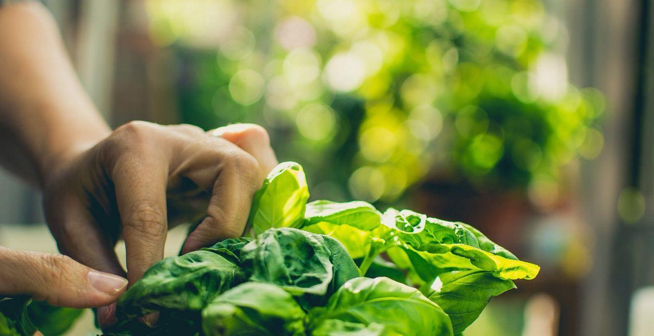 Close-up of leafy vegetables
