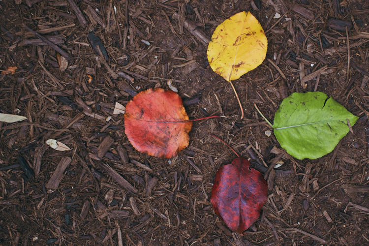 Leaf Plant Part Autumn Nature Dry Change Close-up Day No People Outdoors Plant Falling Land Leaves Leaf Vein Vulnerability  Natural Condition Stages Levels Colorful Color Colors Yellow Green Orange