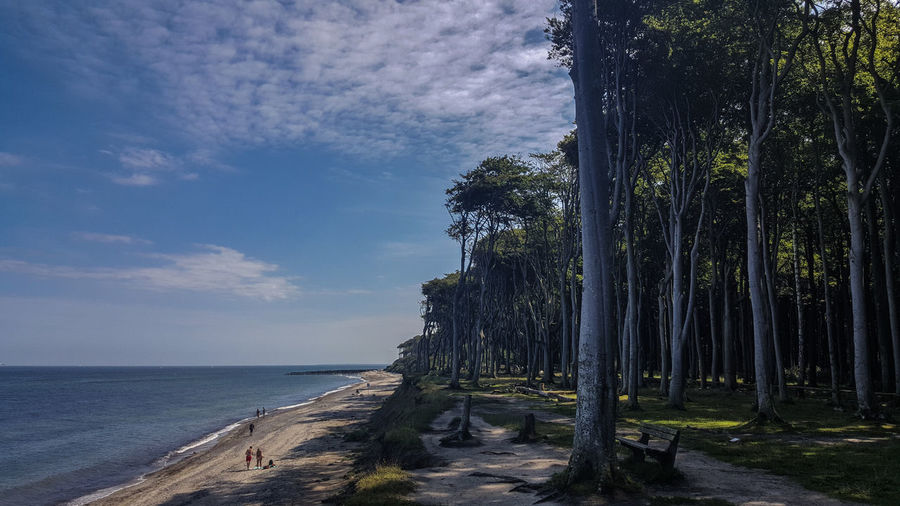 Baltic Sea Gespensterwald Ostsee Ostseeküste Beach Beauty In Nature Day Horizon Over Water Nature No People Outdoors Scenics Sea Sky Tranquility Tree Water