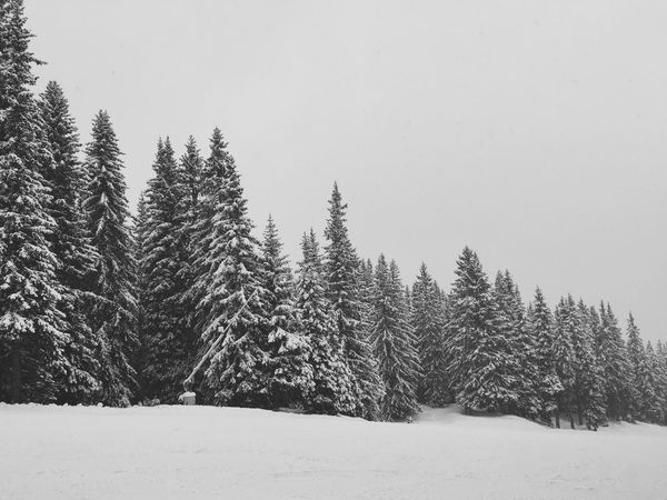 Winter forest 🌨❄️🌲 EyeEmPaid Snow Winter Nature WeLoveNature  Throwbackthursday  Vscocam VSCO Snowfall TravelThursday Alps Southtyrol  Picoftheday Pictureoftheday
