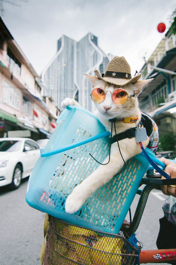 Close-up portrait of cat wearing sunglasses in bicycle basket on road