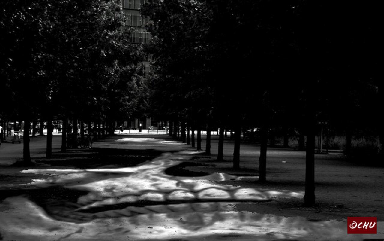 tree, winter, snow, cold temperature, night, outdoors, nature, no people, illuminated