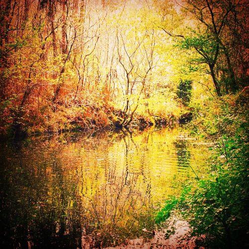 Un decimoctavo otoño, un mundo de ensueño, qué es real y qué ficción, es un mundo hecho para cometer locuras, tu mundo, tus otoños, vividos y por vivir, tus árboles, sus hojas cayendo y creciendo en un ciclo sin fin... Feliz cumpleaños @saripusash, te mer