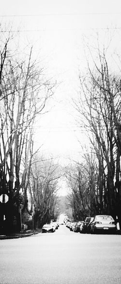 "Blackandwhite TreePorn TunnelPorn The Fragile  ""Rise Blind"""