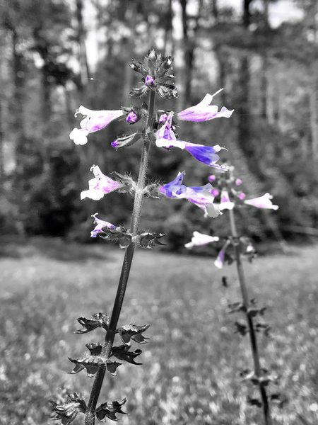 Flower Fragility Purple Freshness Nature Focus On Foreground Beauty In Nature Day Close-up Outdoors No People Growth Flower Head Christian Kustomz 3XSPUnity Check This Out Martin Lake State Park EyeEm Nature Lover Low Angle View Springtime