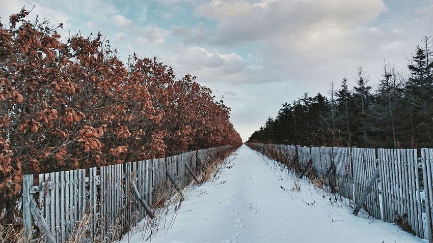 どこまで続いてるのか…あっちまで歩く気にはなれなかったよ。 Nature Black_chica1712 Chica's Winter Winterlandscape Winter Snow Landscape Landscape_photography Winter Wonderland Cloud - Sky Sky Tree