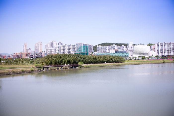 울산의 태화강과 십리대나무밭 Bamboo Bamboo Forest Bamboo Tree... Forest Forest Park Forest Photography Outdoors River River View Riverside Ulsan Ulsan_korea