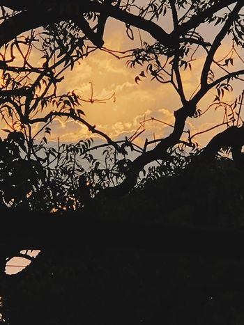 Good Morning Sunset Tree Plant Sky Branch Nature Beauty In Nature No People Scenics - Nature Tranquil Scene Outdoors Cloud - Sky Orange Color Sunlight Plant Part Low Angle View Tranquility Bare Tree Growth