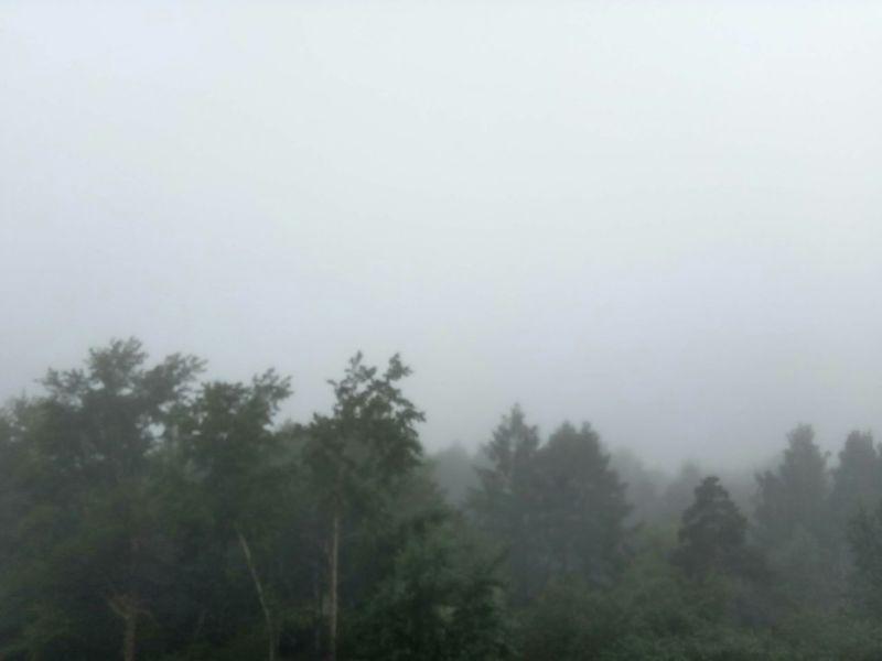 Nature Sky Екатеринбург Природа природароссии Day Природа России ПриродаМоимиГлазами лето2017 леснаясказка лес и природа туманноеутро туман туман в лесу