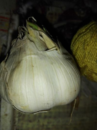 Garlic Bulb Garlic Garlic Head Vegetable Alternative Medicine Usturoi Incoltit Usturoi Veronica Ionita Wolfzuachiv Veronica IONITA Photography WOLFZUACHiV Photography Close-up