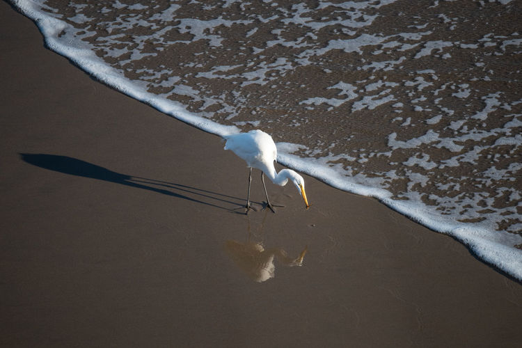 Seagull on a beach