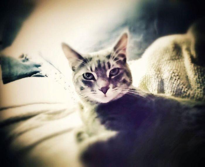 Cat Mykittybuddy Rowdy  Mybestfriend