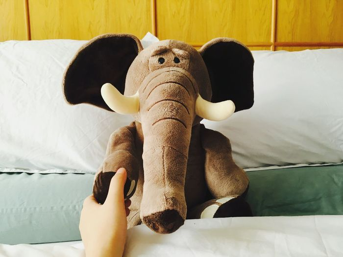 Close-up of stuffed elephant on bed at home