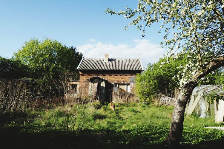 Ruined Abandoned Abandoned Buildings Abandoned Places Brick Building Red Brick Tree Rural Scene Sky Architecture Building Exterior Grass Built Structure Tranquility Tranquil Scene Calm Idyllic Scenics Countryside