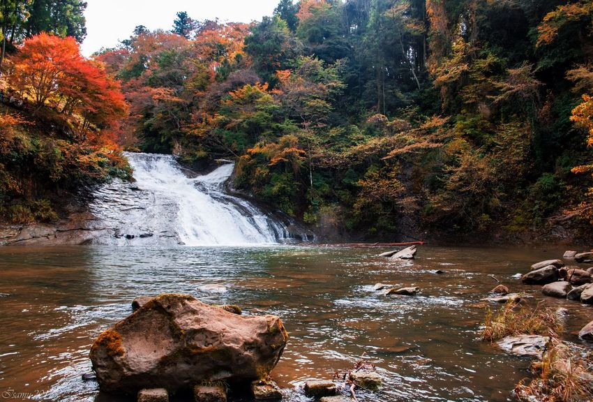 Nature Tree Autumn Water Forest River Beauty In Nature Waterfall Rock - Object No People Outdoors Scenics Tranquil Scene Day Landscape Tranquility Sky