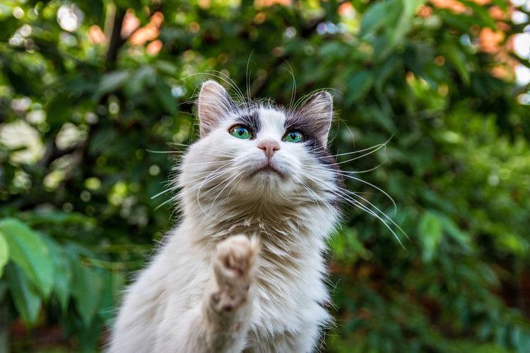 Close-up portrait of cat against plants