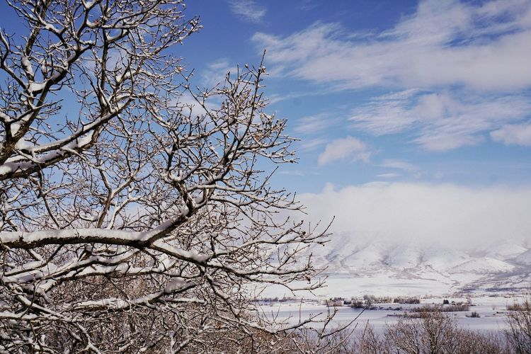 Tree Nature Winter Cloud - Sky Day Sky Beauty In Nature Huntsville Utah Beauty Pineview Dam