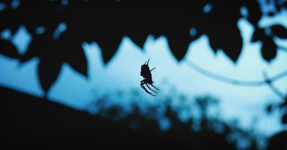 Nature Spider Light And Shadow