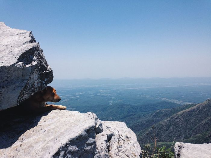 Dog resting on rock at mountain against sky