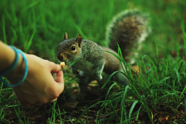 Human Hand Human Body Part One Animal Holding Animal Themes Squirrel Rodent Mammal Animals In The Wild One Person Real People Animal Wildlife Nature Eating Outdoors Pets Day Close-up Grass Food Out Of The Box