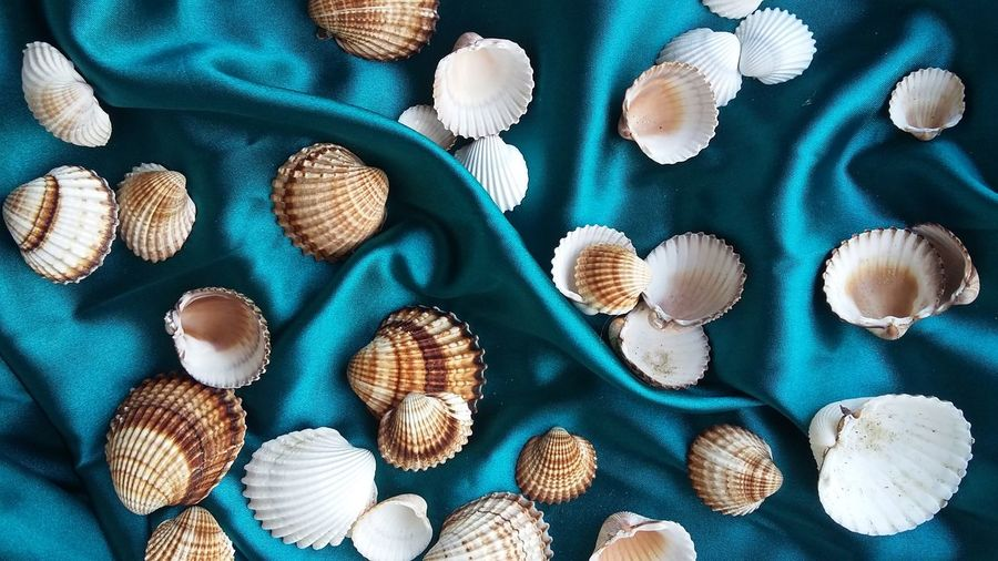 High Angle View Of Seashells On Silk
