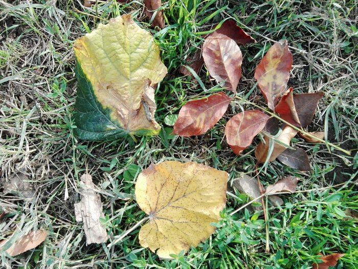 Leaf Field High