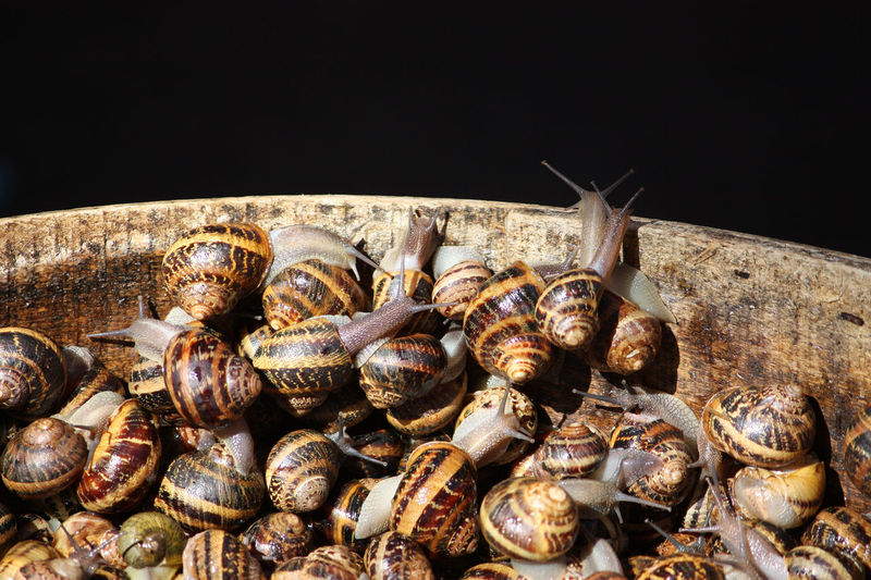 Curiosity Copy Space Copyspace Cuisine Food And Drink Market Animal Shell Animal Themes Black Background Close-up Crustacean Day Delicatessen Delicious Food Fresh Freshness Group Of Animals Healthy Eating Italy Large Group Of Animals No People Outdoors Sea Life Seafood Snail Snails