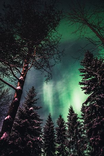Under the trees Tree Beauty In Nature Forest Tranquility No People Nature Low Angle View Sky Tranquil Scene Outdoors Lapland Landscape Scenics Freshness Night Green Color Snow Winter Nature_collection Travel Arctic Aurora Borealis Northern Lights Eye4photography  Hanging Out