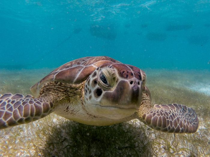 Close-up of a turtle at seabed