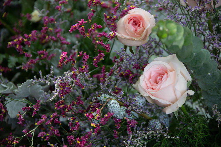two rose and