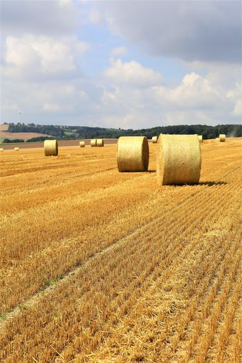 Nature Harvesting No People Cloud - Sky Tranquil Scene Agriculture Farm Plant Field Bale  Land Hay Landscape Environment Sky Rural Scene Outdoors