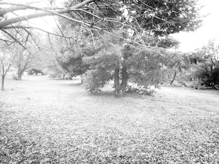 Taking Photos Bw-collection Eye For Photography Australian Native Trees