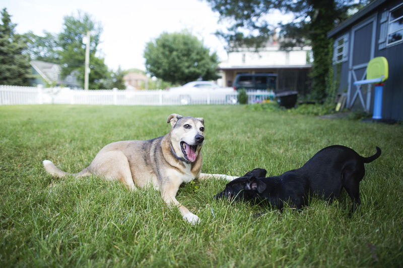 Dogs Dogs Playing  Family Happy Dog Kids Nature Animal Themes Day Dog Dogs Playing Together Domestic Animals Grass Kids And Pets Lake Mammal Nature No People Outdoors Pet Pets