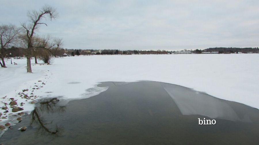 Grey Day Around The Lake Cold Temperature Afternòon Shoot Winter Scenes Almost Frozen Bare Tree Reflection Lake Cadillac Pure Michigan